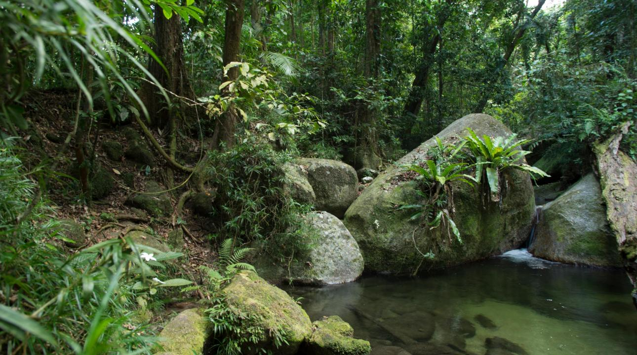 Jungle river and rocks