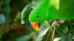 Green parrot with an orange and yellow beak
