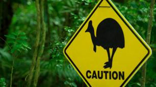 Caution sign with an image of an emu